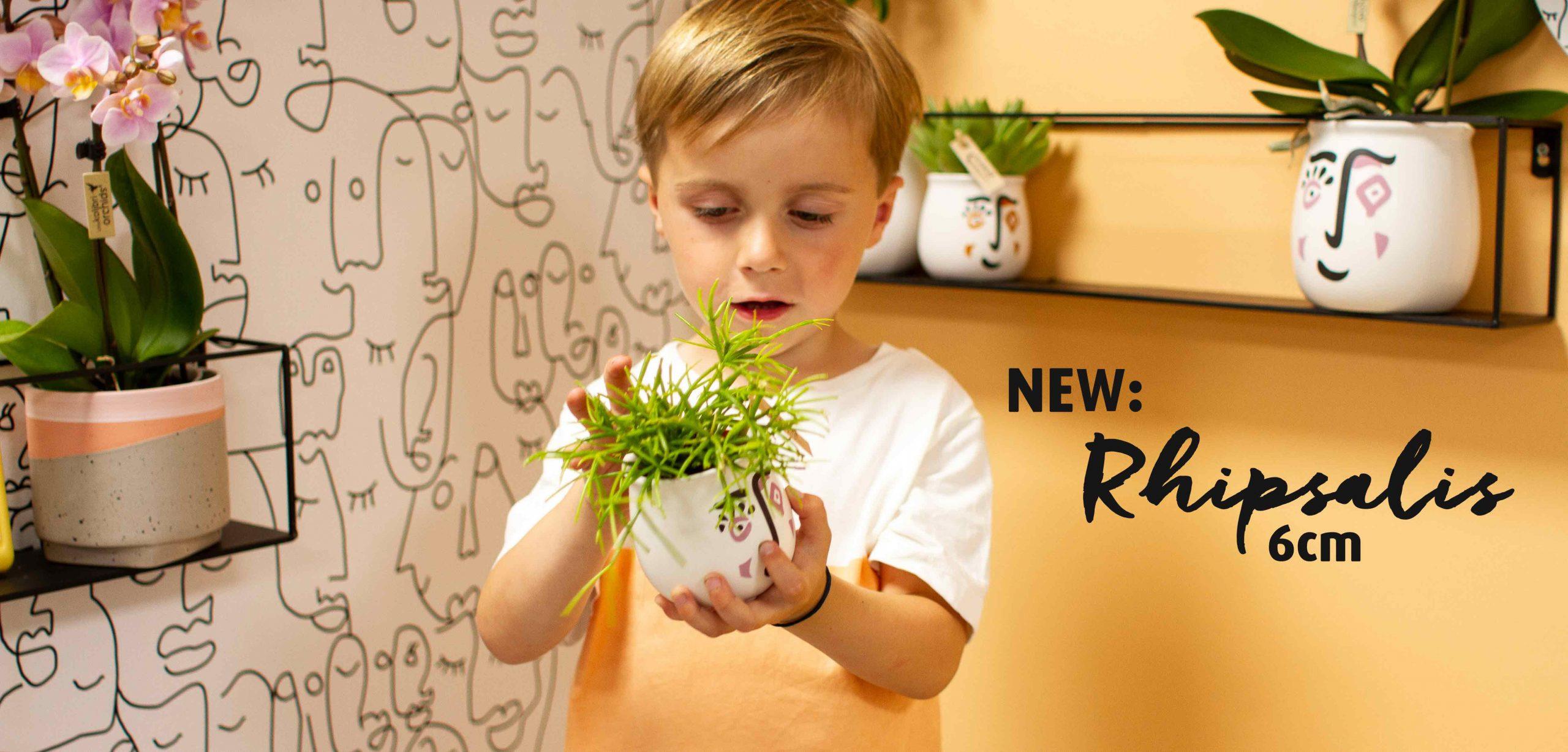 OK plant Rhipsalis