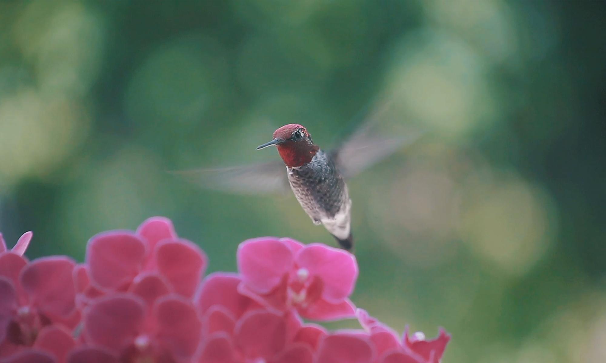Merkbeeld Kolibri Company