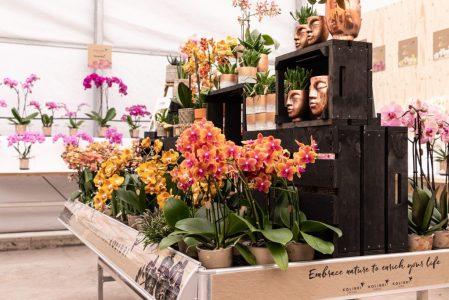 bloeiende assortiment okplant kolibri orchids